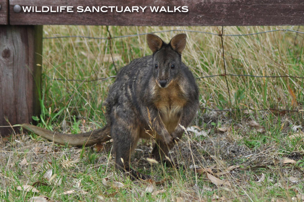 Wildlife Sanctuary Mornington Peninsula